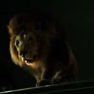 Zoo 2015 Lion