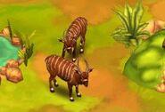 Bongo-antelope-zoo-2-animal-park