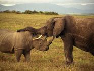 Elephant-Rhinoceros