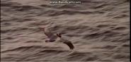 Jurassic Park Pelican