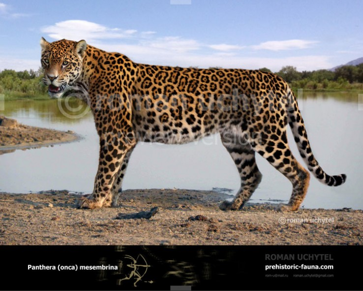 Lovely Panthera Onca Mesembrina1 738x591. The Pleistocene South American Jaguar ...