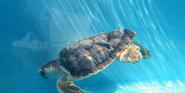 Pittsburgh Zoo Sea Turtle