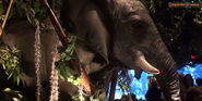 Rainforest Café Elephant