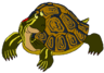 Tad the Red-Eared Slider