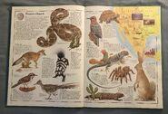 The Animal Atlas (4)