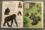 DK Encyclopedia Of Animals (86)