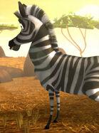 Hugo the Zebra