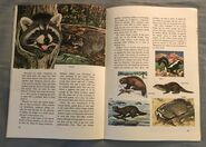 A Golden Exploring Earth Book of Animals (13)