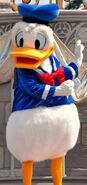 Donald live 2