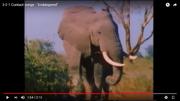 Endangered Elephant