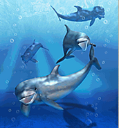 ZT-Bottlenose Dolphin