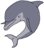 Daisy the Bottlenose Dolphin