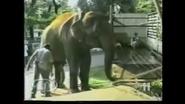 Maximum Exposure Elephant