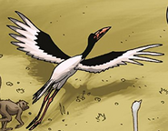 Saddle-Billed Stork in TLK Wild Schemes and Catastrophes