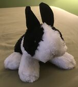 Xavier the Dutch Bunny