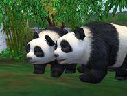 Zt2-giantpanda