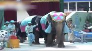 DIS Elephants