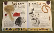 Pet Dictionary (20)