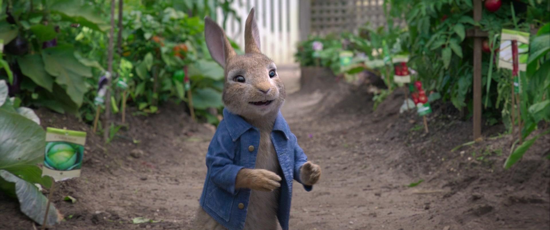 Peter rabbit sex gallery