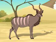 Rileys Adventures Greater Kudu