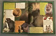 Wild Creatures (Eyes On Nature) (36)