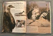 Birds (Eye Wonder) (14)