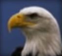 Eagle-disneythinkfast
