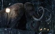 NatM Mammoth