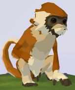 Patas Monkey WOZ
