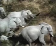 RWA African Elephants