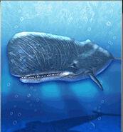 Sperm Whale ZT