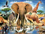 African elephant zebra hippopotamus lion rhinoceros crocodile