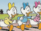 April, May and June Duck