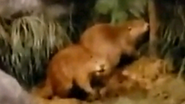 Rolling Hills Zoo Beavers
