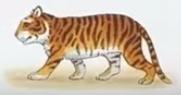 Tiger usborne my first thousand words