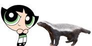 NatureRules1 Buttercup meets Honey Badger