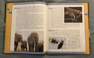 Scholastic Encyclopedia Of Animals (18)