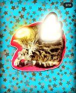 2019 Grisette the Angel Tabby Cat