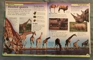 DK First Animal Encyclopedia (19)