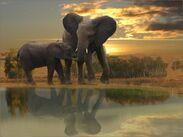 Elephants in the Bush