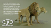 Model Lion and Lioness