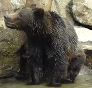 Okland Zoo Grizzly
