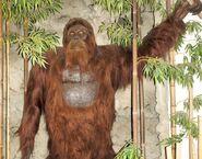 Orangutan, Gigantopithecus