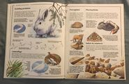 Usborne World Wildlife- Mountain Wildlife (9)