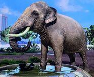 Indian Elephant ZTX