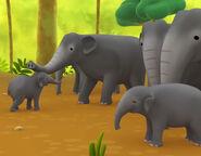 LTWR Indian Elephant