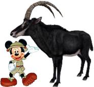 Mickey meets sable antelope