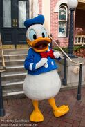 Walt Disney's Donald character central