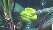 Zoo Miami Viper