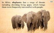 Elephants Face a Range